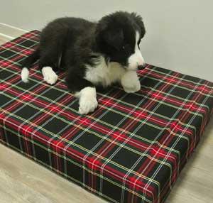 cucce-per-cani-interno-materassino